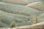 landscape of rolling hills near Korumburra